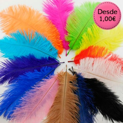 Ostrich Colourful Feathers